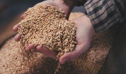 Grain Shed Landrace Grains